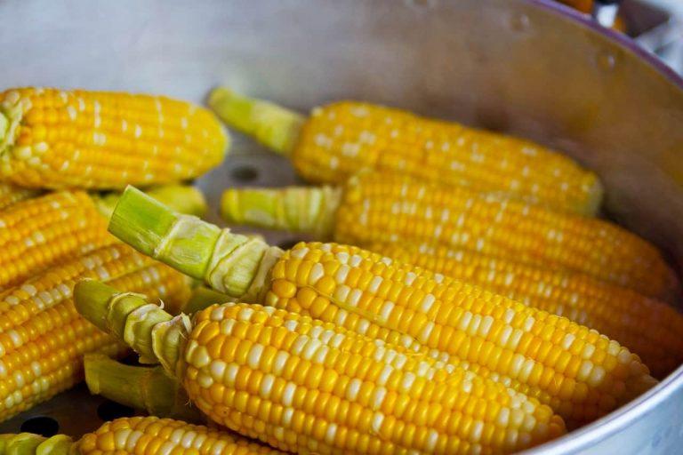 Mehrere Maiskolben in einer Schüssel