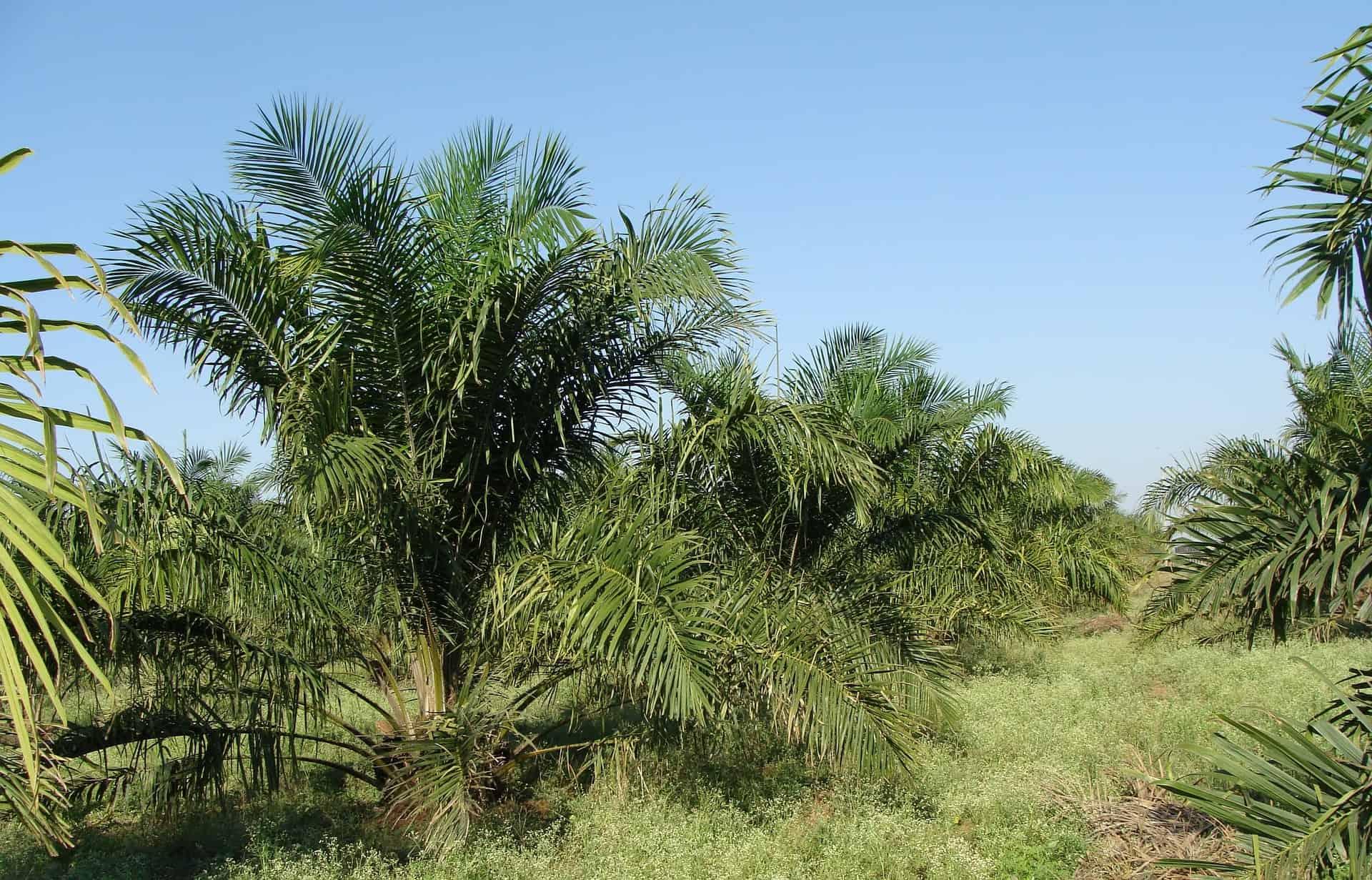 Palmöl: Test & Empfehlungen (01/21)